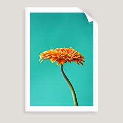 Photographic art prints